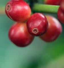 CafeRey fruta